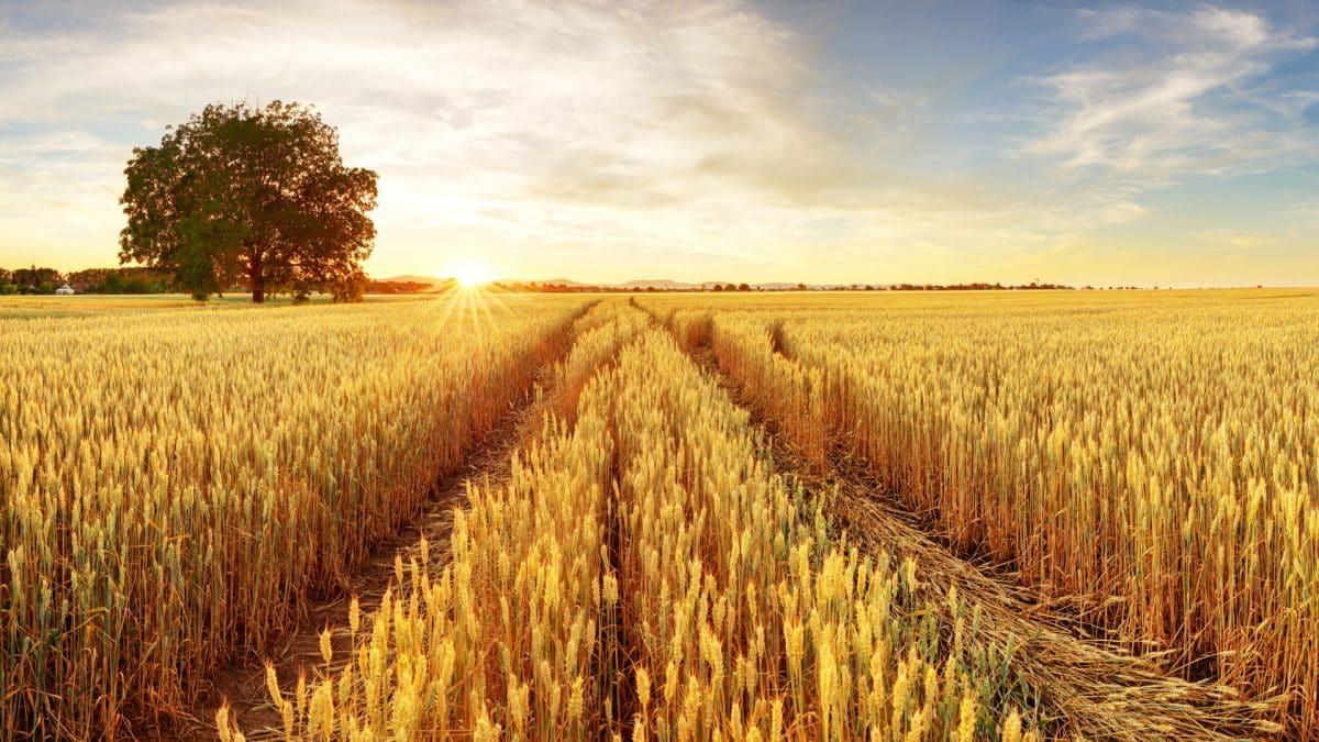 Découvrir l'impact environnemental de son assiette